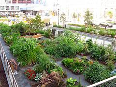 urban gardening - flickr